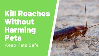 Tips on How to Kill Roaches Without Harming Pets