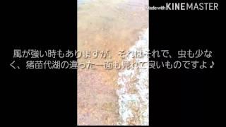 福島県猪苗代湖崎川浜無料キャンプ場です!