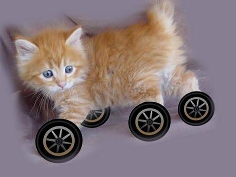Proč nemají zvířata kola?