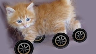 Why Don't Any Animals Have Wheels?