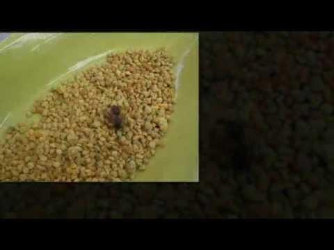 Αυξημένο σάκχαρο αίματος από αμινοξέα
