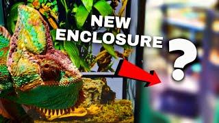 My PET Chameleon Gets A New ENCLOSURE!!