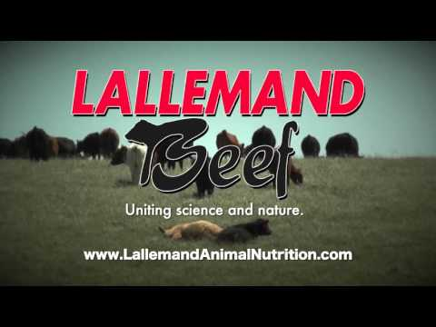 Video DocTalk - Johne's Disease in Cattle