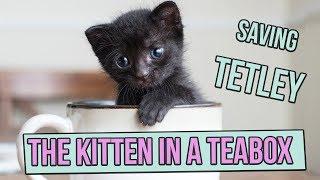 Saving Tetley, the Tiny Kitten in a Teabox