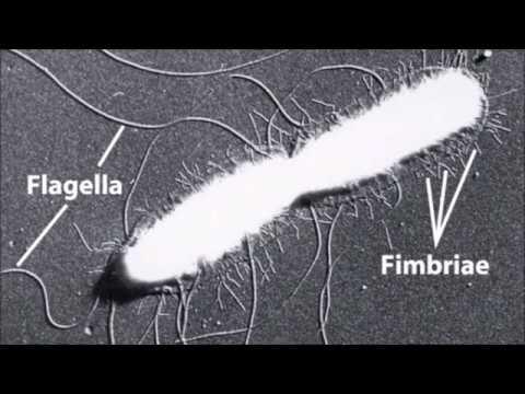 Milyen gyógyszer hatékony a férgek ellen