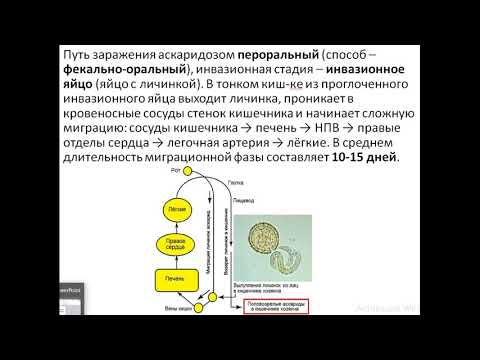 Giardiasis betegség kezelése