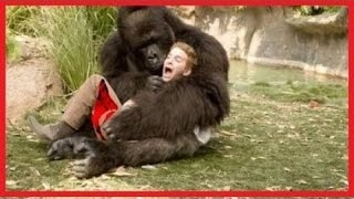 Gorilla Vs Lion | www.pixshark.com - Images Galleries With ...