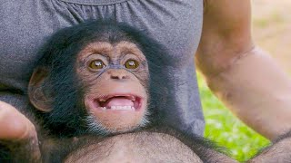 Poppy The Baby Chimp Has A Huge Smile | BBC Earth