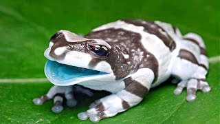 COOLEST AMPHIBIANS IN THE WORLD