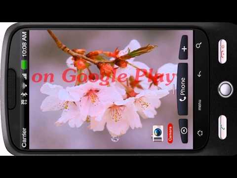 Video of Rain Drizzles Cherry Branch