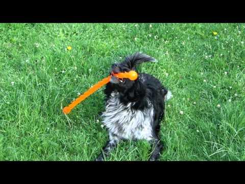 Hondenspel Dogs & Co Oeffelt 12-5-11