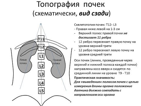Анализ простатита видео