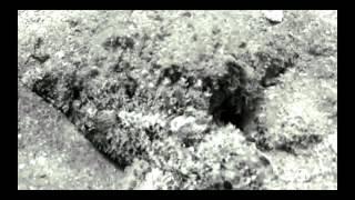 preview picture of video 'Breath by Al Moutasim Al Maskery'