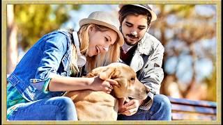 Клуб любителей собак. Как и какую выбрать собаку. Что нужно знать о породе 2018