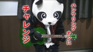 【フェイフェイのパンダでもわかるギター講座】ハンマリング
