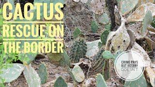 Cactus Rescue Jahb