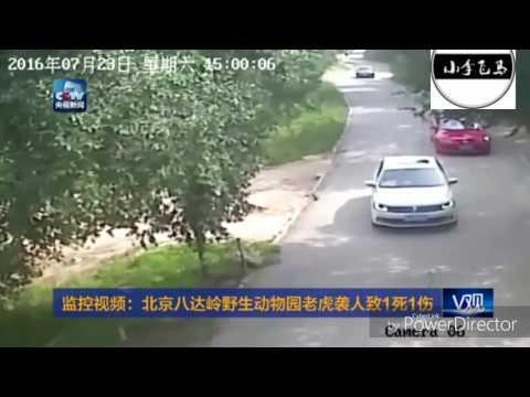 女遊客背後遭襲被拖走