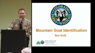 Colorado Hunting Tips: 'How to ID Mountain Goats'