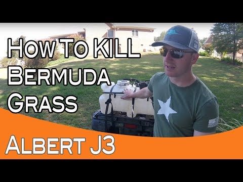 Killing Bermuda Grass With 1 Application