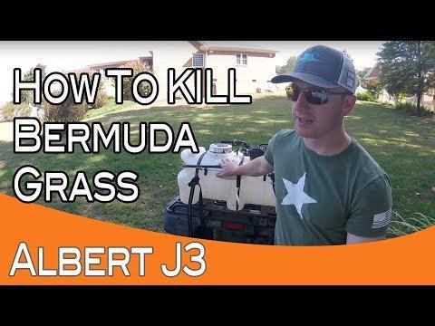 Killing Bermuda Grass With 1 Application