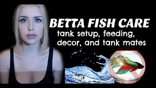 LET'S TALK ABOUT BETTA FISH (Care Guide)
