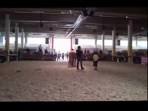 Eine Einführung in Equine Breathing