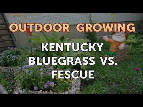, title : 'Kentucky Bluegrass Vs. Fescue