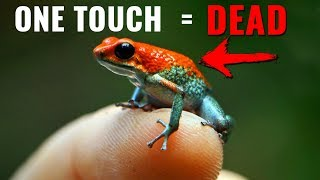 10 Most Dangerous Animals in the Amazon