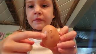 How to hatch a chicken with just a normal egg from the grocery store