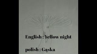 Names of common edible mushrooms in Polish. Nazwy popularnych grzybòw po Angielsku
