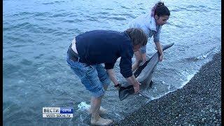 Туристы пытались спасти дельфина в Сочи