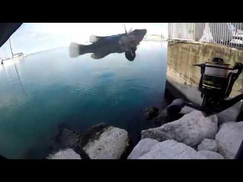La pesca sul golfo di Berdsk
