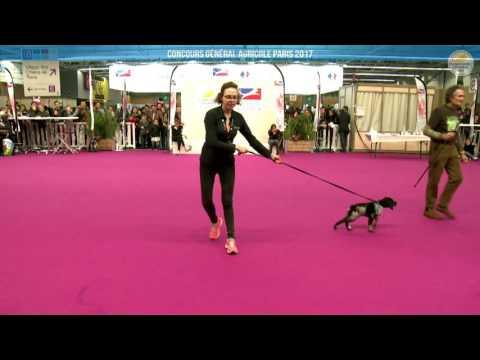 Voir la vidéo : Ring Canins du 05 mars 2017, partie 3