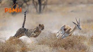 Top 10 Loài động vật có tốc độ Nhanh nhất hành tinh - 386 km/h