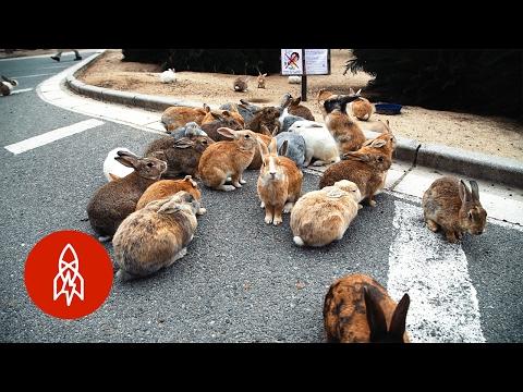 Ostrov okupovaný králíky