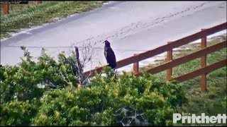 SWFL Eagles ~ Catch Me If You Can ~ E12 & E13 Playing On Ground, Palm Tree & Fence 3.16.19