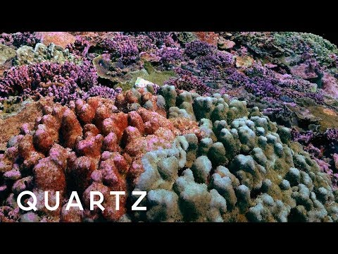 Remarkable 3D Photography Technique Captures Coral Reefs Like Never Before
