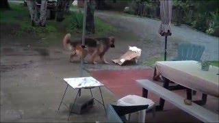 У этих животных точно есть интеллект! - Подборка от Kometa.Red