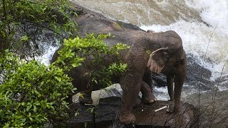 video: Six elephants die while trying to save each other in 'Hell's Abyss' Thai waterfall