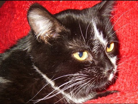 Глисты у кошек и собак. Дипилидиоз. Огуречный цепень