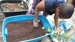 My Vegetable Garden Start 2020 {CoronaVirus Inspired}{ Homestead Mississippi Girl In North Carolina}