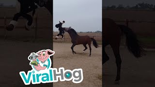 animale calul se joaca
