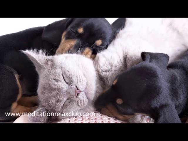 Sleeping Dog: Pet Therapy Music, Dog Therapy Relaxing Nature Sounds to Help your Pet Sleeping