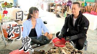 《一日系列第四十八集》是男人都需要~邰智源帶你來抓牡蠣囉!-一日蚵農