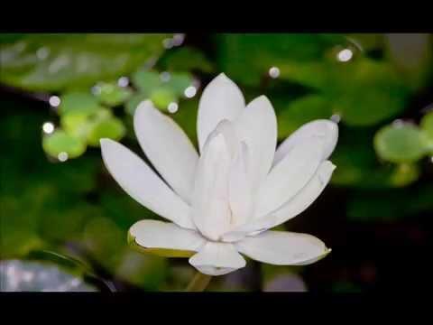 Ruta – meditacija – atsipalaidavimas