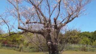 鹿児島の春を満喫出来るおすすめのスポット