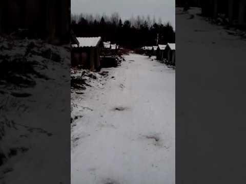Видео: как живётся песцам в «Солецком зверохозяйстве»