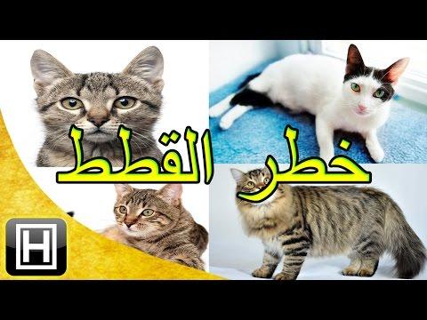 أخطر مرض موجود في القطط يسبب أشياء لا تخطر لك على البال