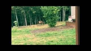 Олені олені