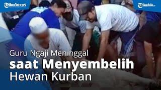 Detik-detik Seorang Guru Ngaji di Serang, Banten Jatuh Lemas & Meninggal saat Sembelih Sapi Kurban
